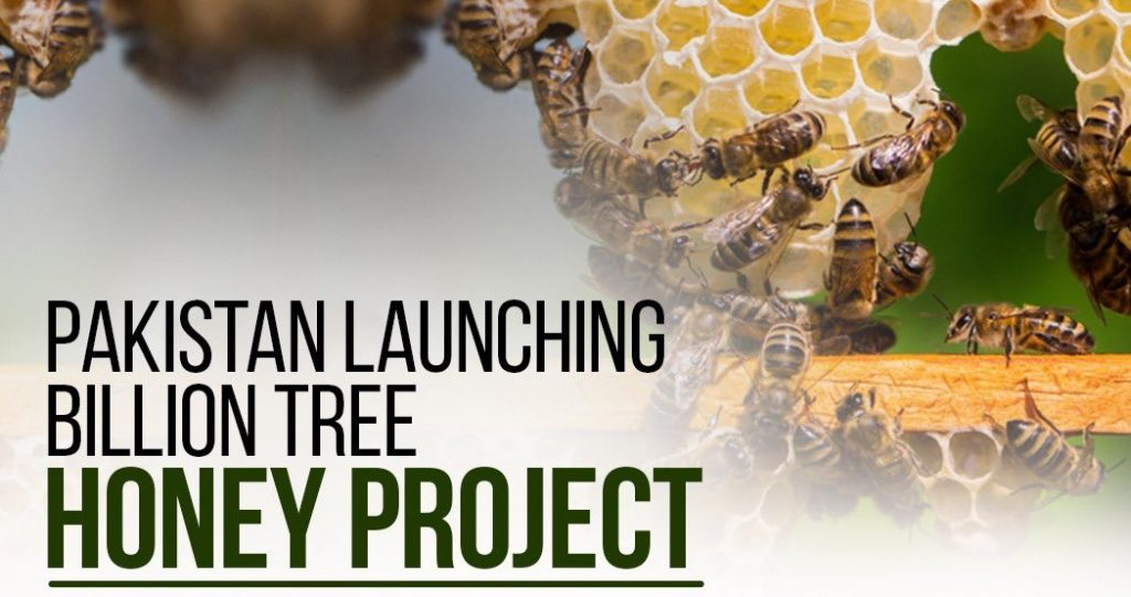Chief Minister Punjab Launches Billion Tree Honey Project 2021